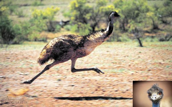maslo-emu3